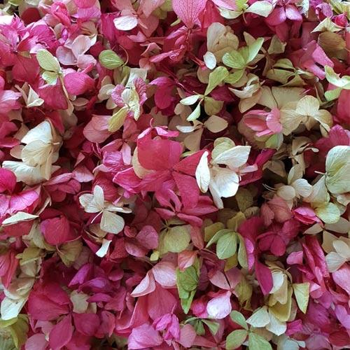 Preserved Hydrangea Confetti
