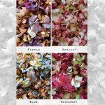 Hydrangea Confetti