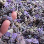 Lavender Flower Confetti