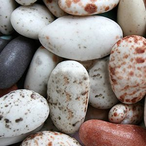 Pebble Candy Coated Almonds